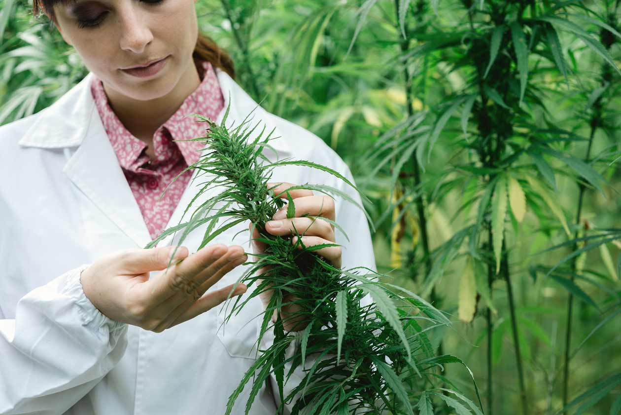 Cannabis Scientist Testing Plant